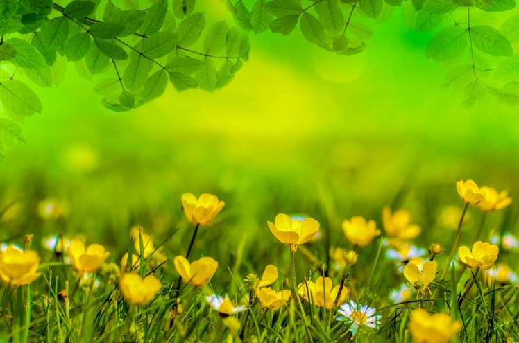 Buttercups and wild flowers.