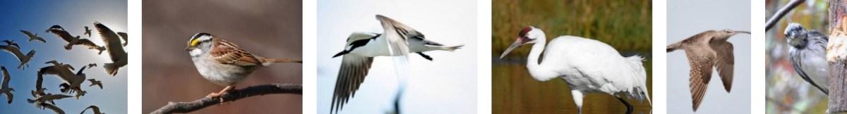 What do birds do during a hurricane?