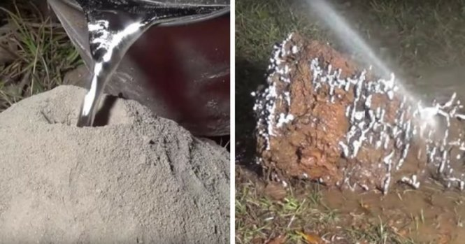 After This Man Poured Metal Inside An Ant Nest What He Dug Up Was