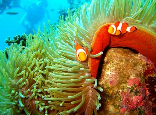 Snorkelen bij Balicasag Island - Bohol, Central Visayas, Filipijnen