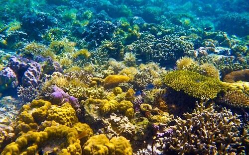 Snorkelen bij Twin Peaks Reef - Coron Island, Palawan, Filipijnen
