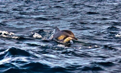 Dolfijnen spotten in de Honda Bay - Puerto Princesa, Palawan, Filipijnen