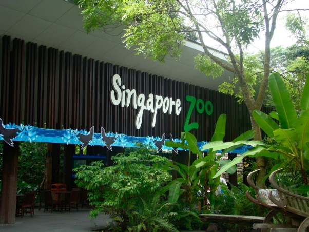 Singapore Zoo Night Safari
