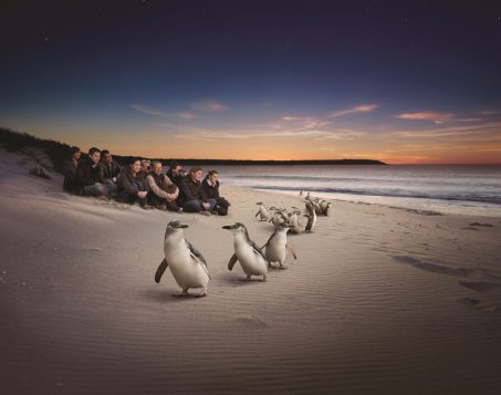 122075 Penguin Parade, Phillip Island Credit Tourism Victoria; Destination VIC