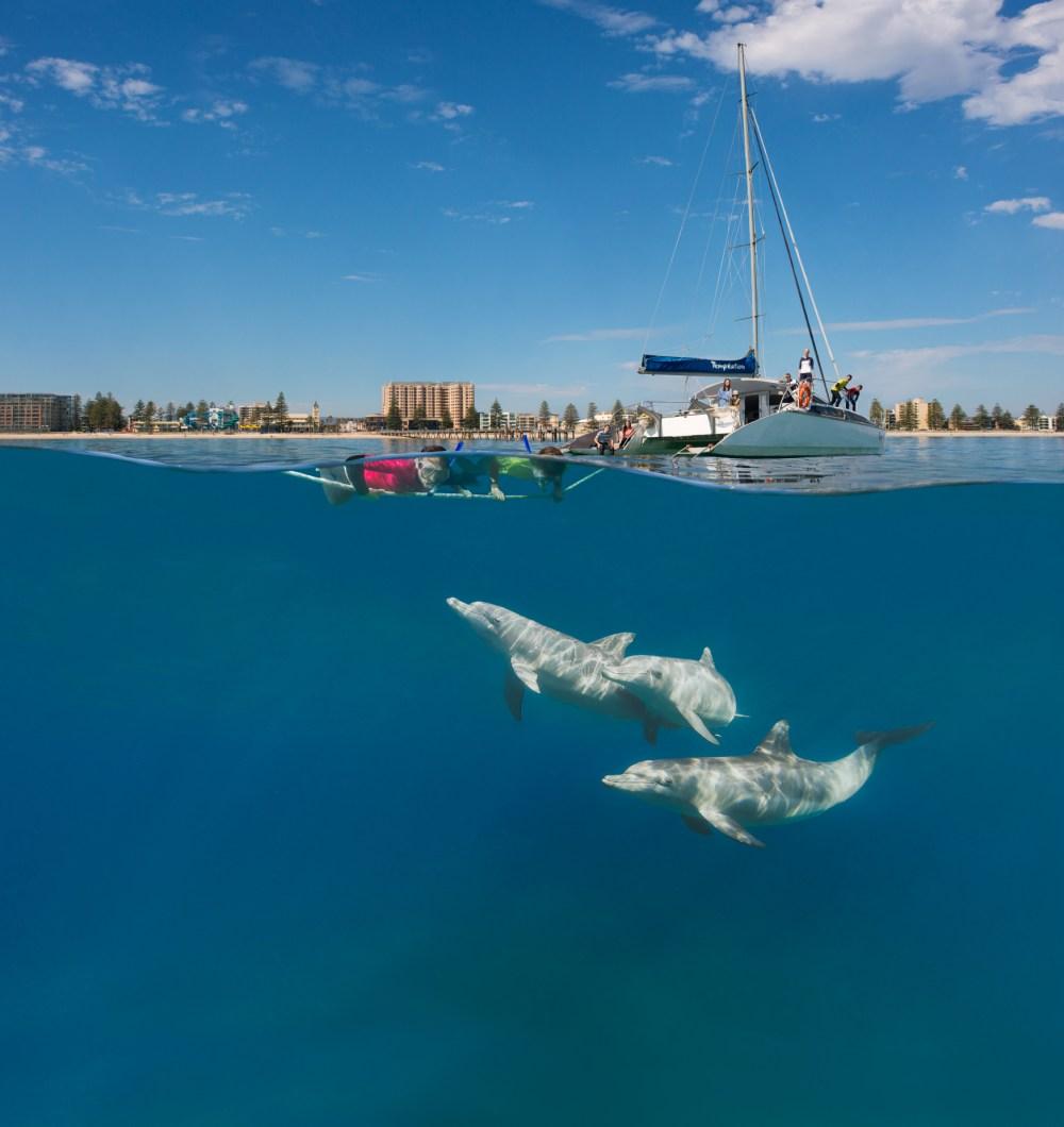 147091 Temptation Sailing, Adelaide Credit South Australian Tourism Commission; Destination SA