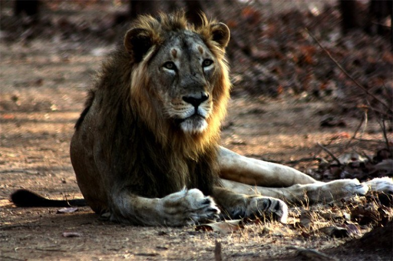 Gir-Forest-National-Park,-Gujrat