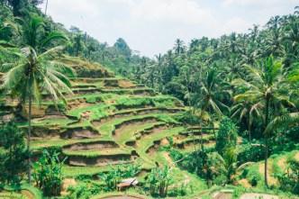 Bali Tegallalang Rice Terraces
