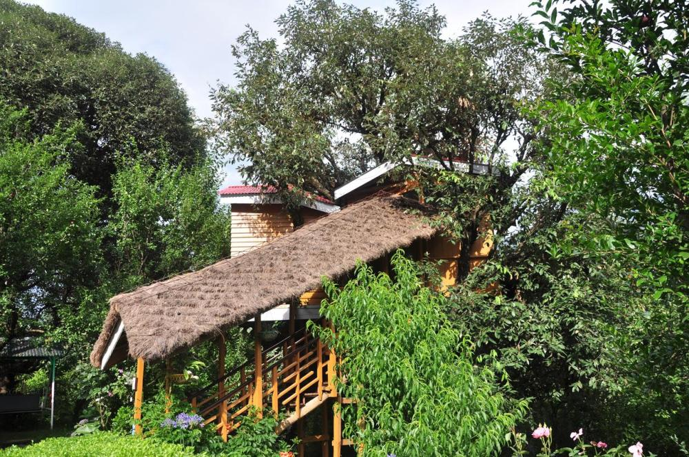 A Tree house, Manali Honeymoon