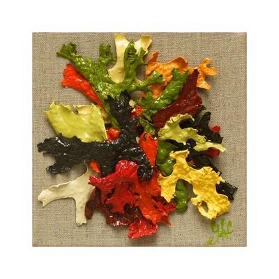 Geraldine Le Calvez -- L'automne Inspiration 2