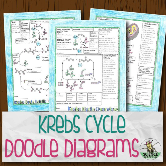 Krebs Cycle Doodle Diagrams