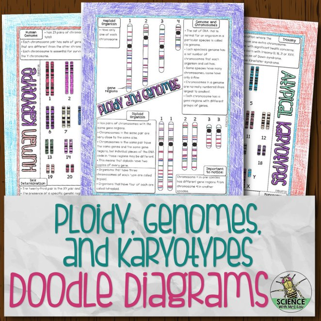 Ploidy, Genomes, and Karyotypes Doodle Diagrams