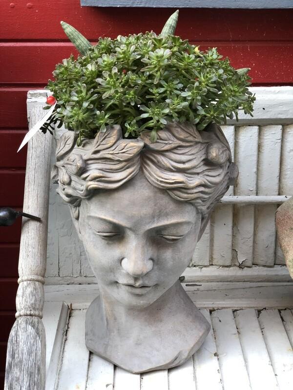 'Golden Bliss' Succulent Large Planter