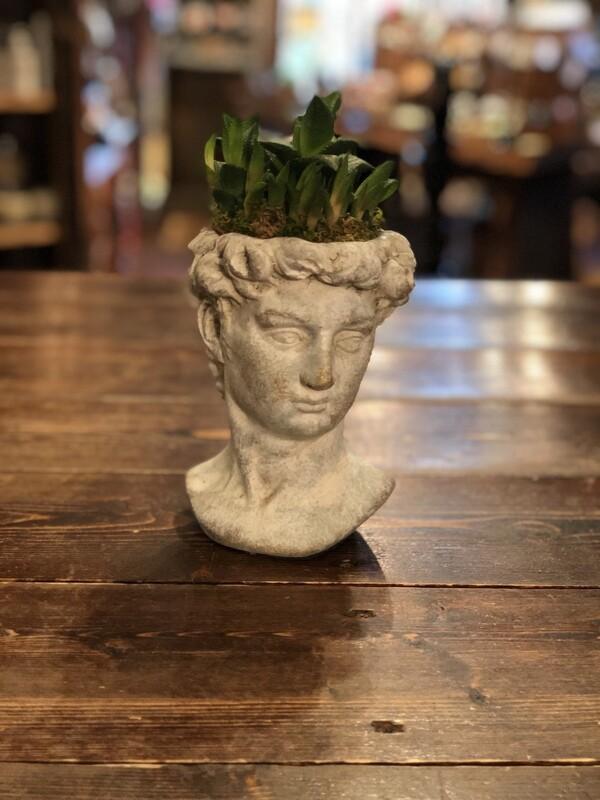 Michelangelo's David Succulent Planter