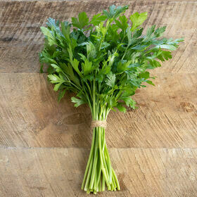 Parsley Herb Plant