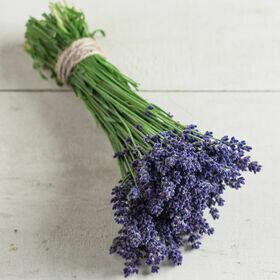 Lavender  Herb Plant