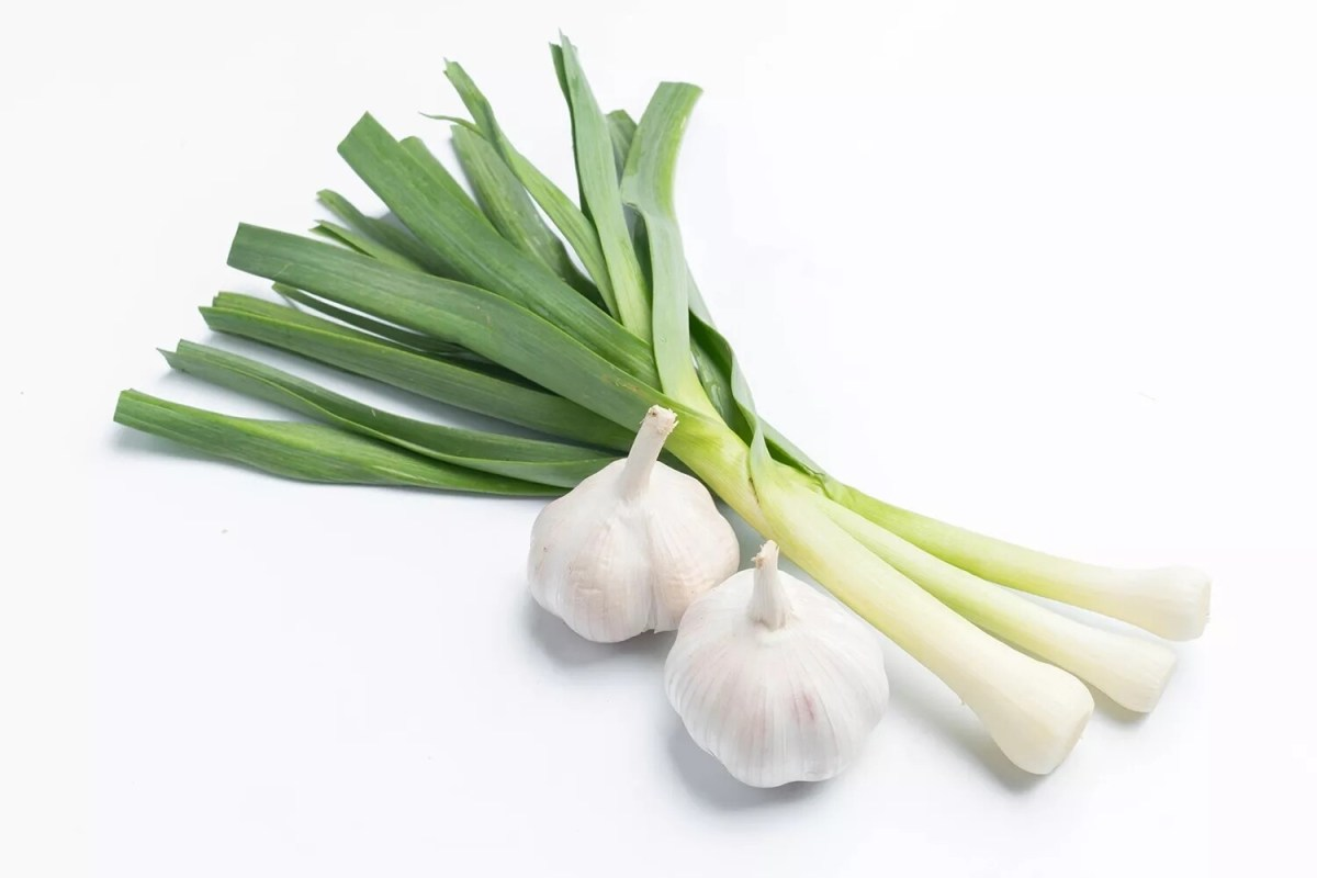 Green Garlic - each
