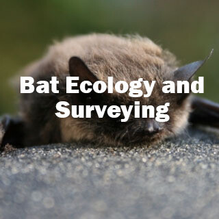Bat Ecology and Surveying (Exeter): 4th & 5th September 2020