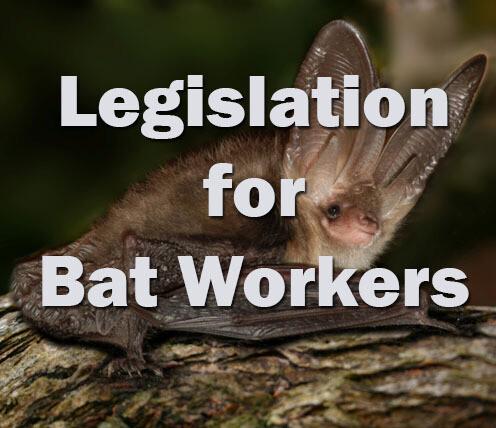 Bats: Legislation for Bat Workers Self-study
