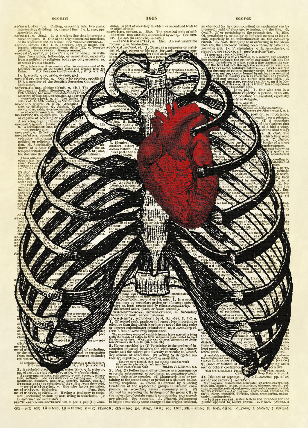 Human Thorax With Human Heart Dictionary Art Print No 10