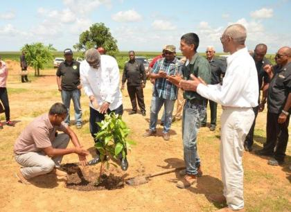 In keeping with Guyana's green agenda and as an expression of friendship, a tree planting exercise was held at the Santa Fe Mega Farm. In picture- Barbados Prime Minister Freundel Stuart plants an avocado tree while President David Granger and the visiting delegation looks on.  President Granger also planted an avacado tree nearby, while Minister of Communities, Mr. Ronald Bulkan planted a 'mamey' tree.