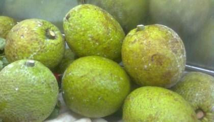 Breadfruits.