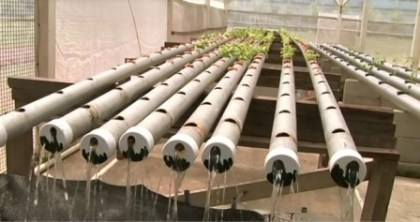 The recycling (hydroponics) method in action at the National Agricultural Research and Extension Institute (NAREI)