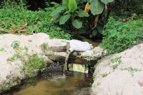 Fresh water springs in Linden