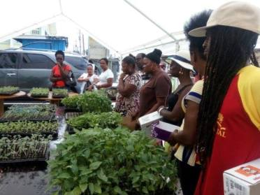 Residents of Linden clamouring for seedlings at one of the seedling distributions organised by LEN.