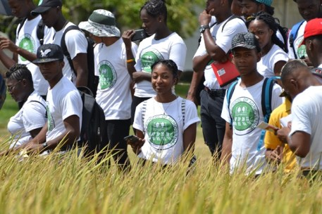 Students from the Guyana School of Agriculture (GSA) in one of the rice fields at Guyana Rice Development Board's (GRDB) Research Station.