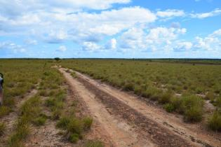 The trail linking the North and Central Rupununi.