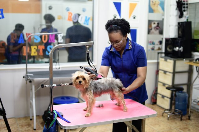 A dog being treated to a fur trim.