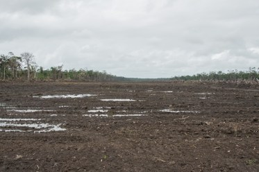 Some of the cleared land for agricultural activities in Ithaca.
