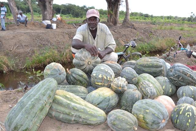 Patrick Howard and his harvested pumpkins.