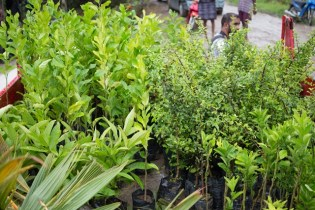 Some of the plants donated to Mocha farmers.