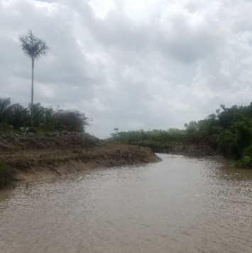 The excavated entrance of the tributary that surrounds Bonasika and flows into the Essequibo River.