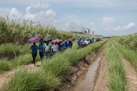 Employees within the ministry's department and agencies, making their way to another section of the Uitvlugt sugar fields, during the familiarization tour on Tuesday.