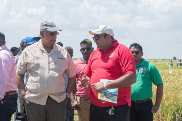 Minister of Agriculture, Hon. Noel Holder pays keen attention as one of the researchers demonstrates.