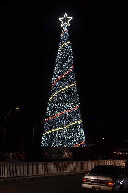 Christmas Tree at the Rahaman's Park Triangle