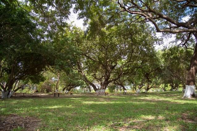 Newly Restored Cashew Grove Park