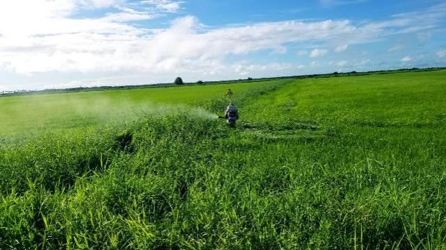 Spraying at Washington, W.C.B