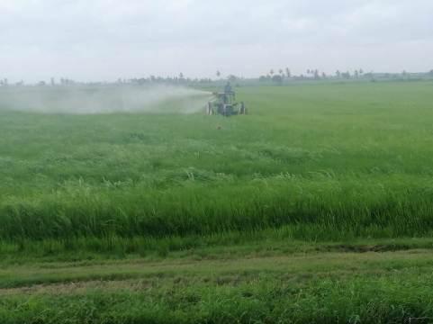 Spraying in Region 2