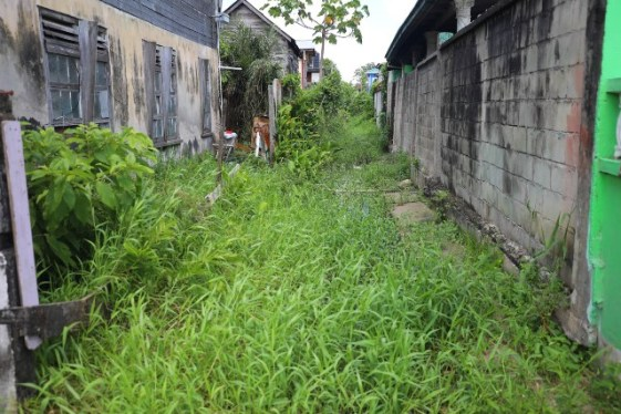 One of the concrete drains in Albouystown that is overgrown with bush
