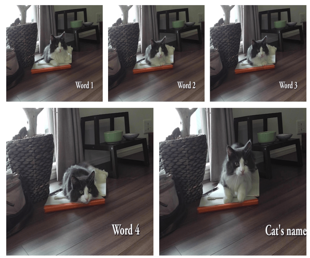 There Is Now Scientific Proof Your Cat Is Ignoring You (#GotBitcoin?)