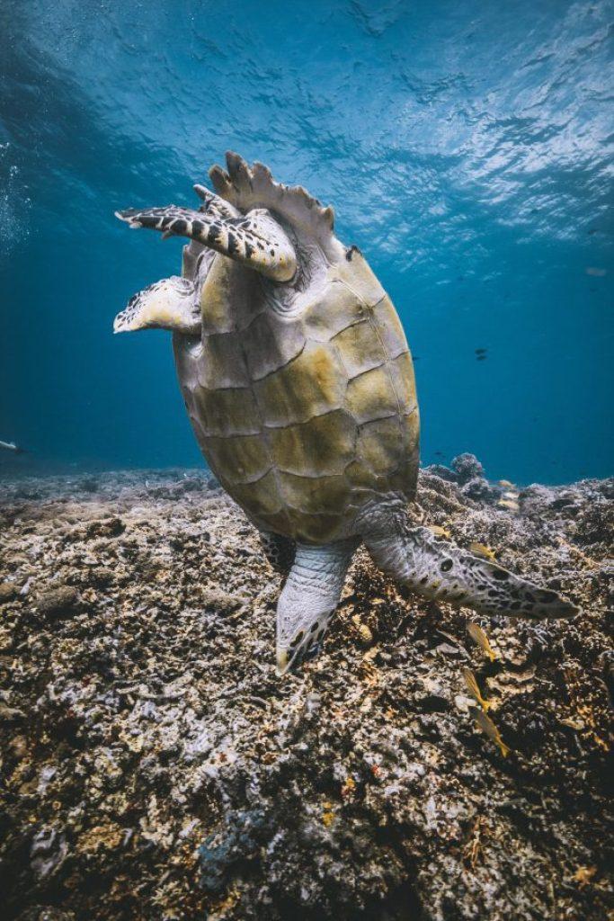 turtle heaven gili trawangan