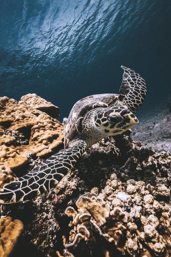 try-scuba-gili-trawangan