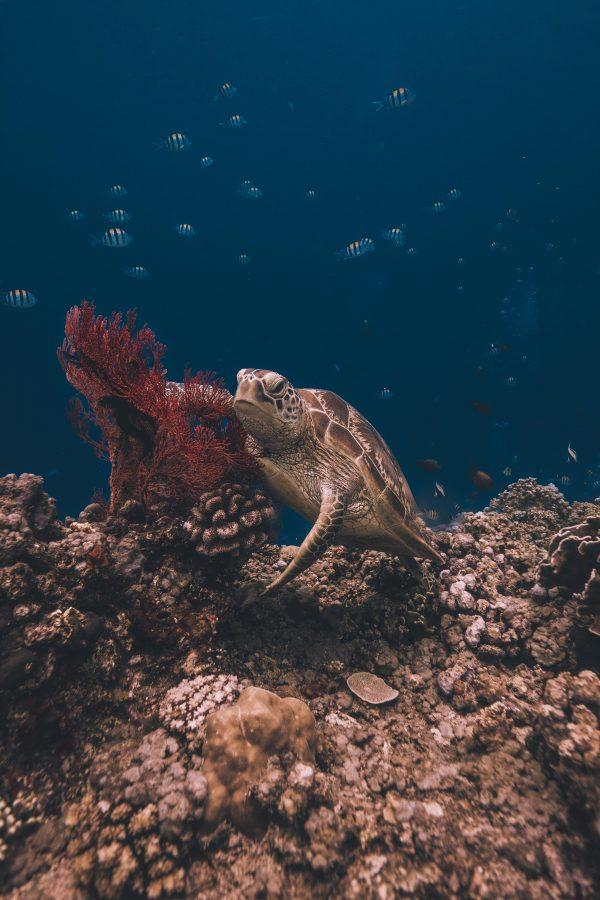 gili islands sea turtle