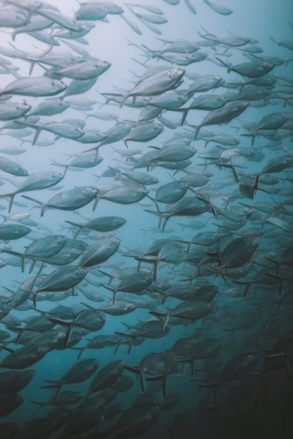 fish during dive in koh tao