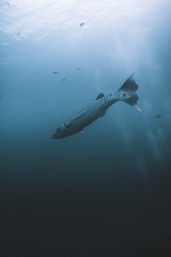 koh tao underwater