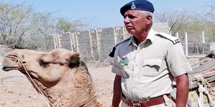 """Camello se """"deprime"""" tras la muerte del policía que lo montaba"""