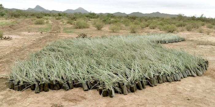 Zonas desérticas; causa de la humanidad y variaciones climáticas
